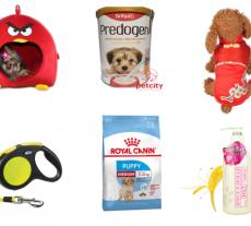 phụ kiện dành cho thú cưng là chó và mèo trong shop petcity