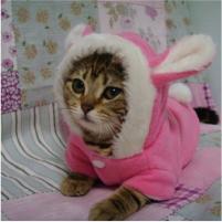 phụ kiện quần áo cho thú cưng là mèo cũng được bày bán trong shop