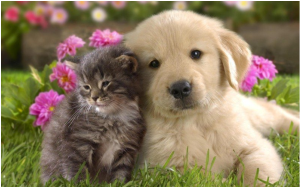 các thú cưng đáng yêu của chúng ta