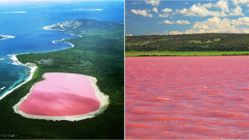 Hồ Hiller (Hồ hồng), Úc