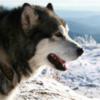 các loại giống chó hung dữ có thể gây nguy hiểm cho con người và các động vật khác