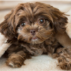 khám phá cách đặt tên thú cưng dễ thương và độc đáo nhất năm 2020