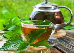 trà cây tầm ma có tác dụng giảm cân cực kỳ hiệu quả