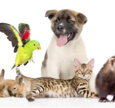 các loại vật nuôi thú cưng dễ thương nhất