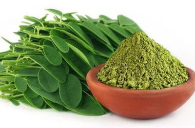 Bột của cây chùm ngây Moringa từ Ấn Độ có công dụng nhiều lợi ích cho sức khỏe