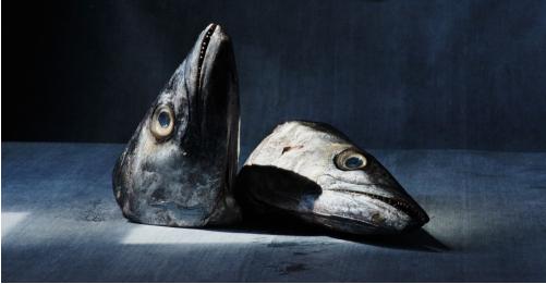 Cá là thực phẩm gây ra nhiễm độc thủy ngân nhiều nhất