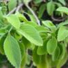 các loại thảo dược trị mất ngủ tốt nhất như cỏ xạ hương, lá kinh giới, cây nữ lang...đem lại giấc ngủ tự nhiên, giảm căng thẳng, mệt mỏi