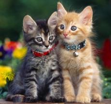 vòng cổ cho chó mèo là một phụ kiện thú cưng cơ bản và cân thiết với vật nuôi
