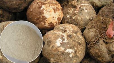 Bột nưa hay bột konjac có tác dụng gì ?