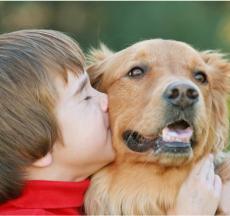 các loại bệnh có thể lây từ chó sang người như ve chó, giun móc, sán dây...