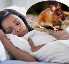 tùy vào mỗi hoàn cảnh trong giấc mơ thì việc nằm ngủ mơ thấy một con chuột xuất hiện đem lại rất nhiều điềm báo cho bạn