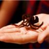 nằm mơ thấy nhện luôn đem lại nhiều ý nghĩa thích thú cho người ngủ